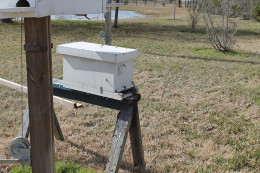 Bees begin to move in assuring the queen was successfully moved in as well.