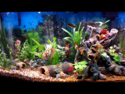 What's the easiest (hardiest?) fish to keep at home in a freshwater aquarium?
