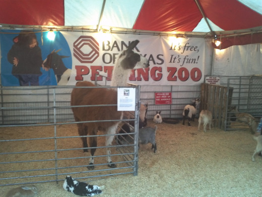 Fort Worth Stock Show Petting Zoo
