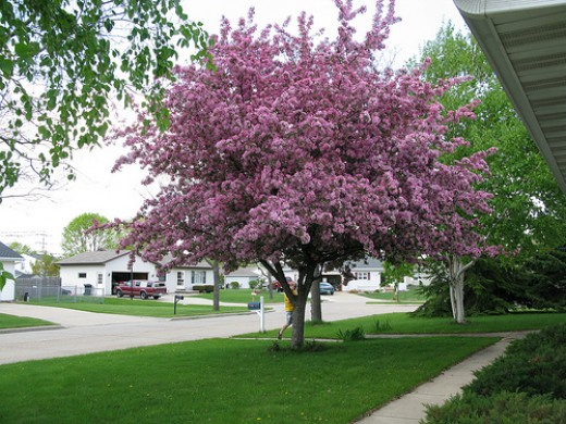 I love the size and irregular shapes of crabapple trees