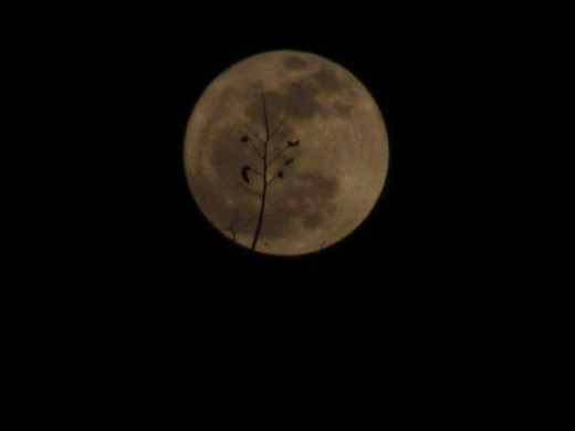 Image 7413, now after only 25 seconds the branch has moved to the center of the Moon.