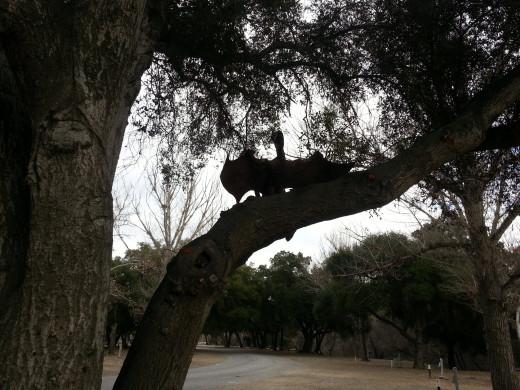 Pterodactyl in a tree. Art by Ricardo Berceda