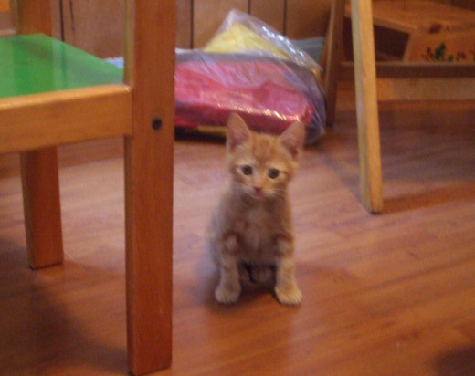 Here is my 6-week-old kitten boy next to a toddler play table chair.