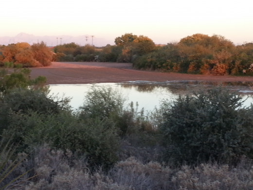 A part of the Riparian Reserve. If you look closely, you can see the Superstition Mountains in the background.