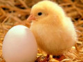 Before You Eat Another Egg, Read This