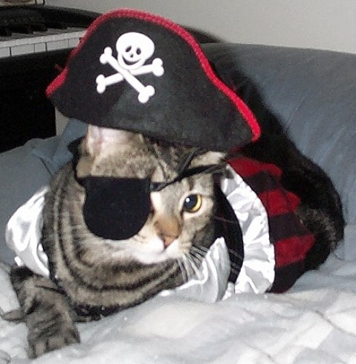 Wearing a Halloween pirate girl outfit, complete with eye patch and hat.