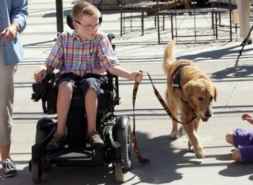 The ADA mandates that a service dog are allowed to go anywhere their owner goes.
