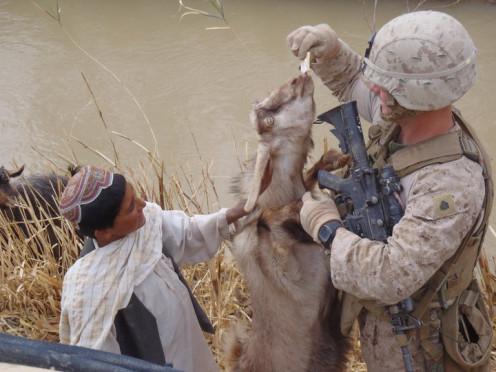 US Marine feeding an Afghan Goat