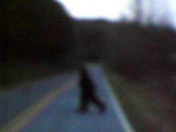 Have You Ever Seen Big Foot Or A Sasquatch?