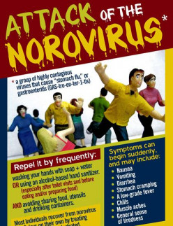 What Is The Narovirus?