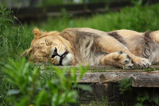 Melatonin can help people who suffer with sleep issues and disturbances to get a good night's sleep.