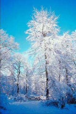 Herbal Remedies for Winter Allergies