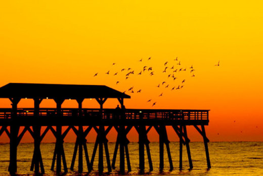 I love this picture of the pier at sunset with the birds.