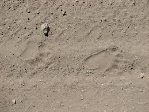Free Black Bear foot prints you may copy and keep feel free!