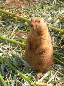 Beware the Groundhog Day