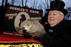 Home> U.S. Groundhog Day 2013: Will 'Punxsutawney Phil' See His Shadow?