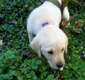 Understanding how the five senses work in your dog