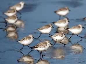 Grays Harbor Wildlife Refuge