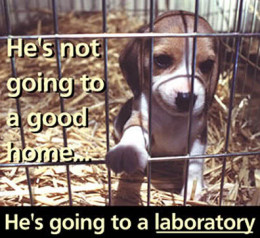 the suffering in animal testing Just under 2 million experiments were carried out on animals last year – with just over half classified as 'mild' but around a third causing 'moderate' or 'severe' distress.