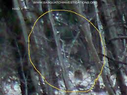 Look carefully to see Bigfoot in the middle of photo