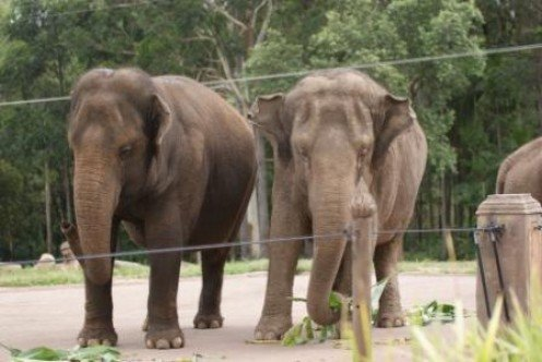 Elephants in their enclosure at Australia Zoo, photographed by Ralph Edgell