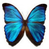 Jenifer Carlos profile image