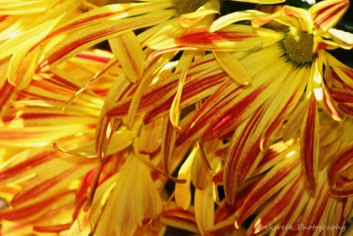 Close up of fall flowers.