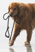 6 Steps to Train Any Dog to Walk on a Leash