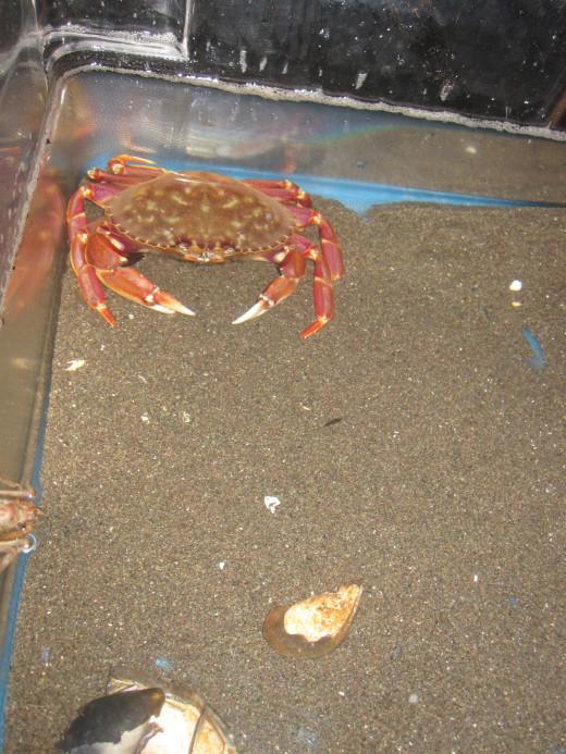 Hey watch it lady I am feeling crabby!