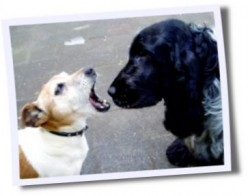 Stop a Dog from Biting - Stop Dog Aggression