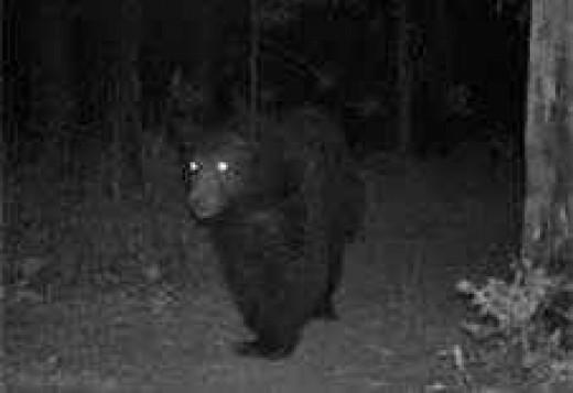 Da Bear!