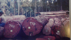 Environmental Protection - Logging.