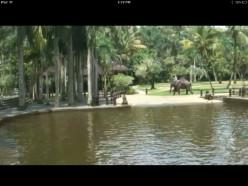 Screen shot of the Bali Elephant Tours Bathing Pool Cam