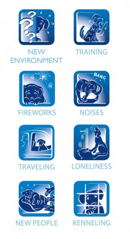 Help your dog through the stress of all these difficult situations with Adaptil