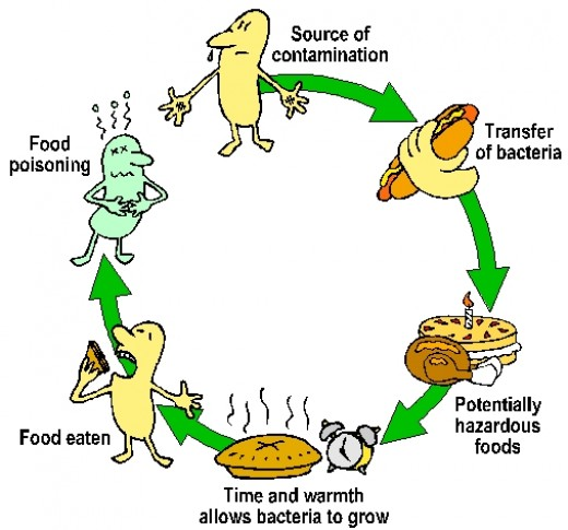 E. coli and Food-Borne Illness