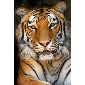 Exotic animal laws may affect you in ways you don't expect.