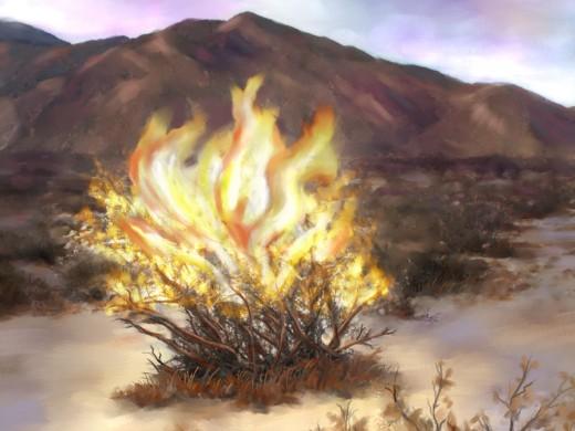 Burning bush to direct