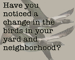Have you noticed a change in the birds in your yard and neighborhood?