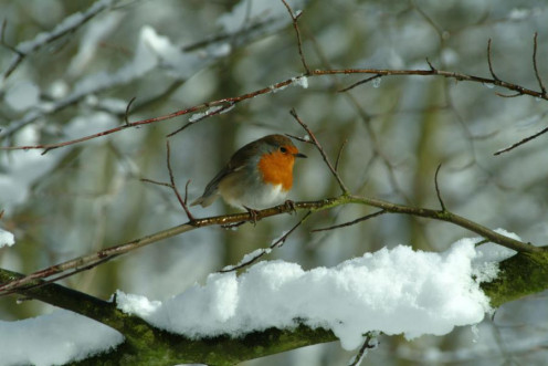 Author Ian Britton http://www.freefoto.com/preview/90-07-6/Winter-Wonderland