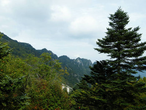 Asian Mountain Forests