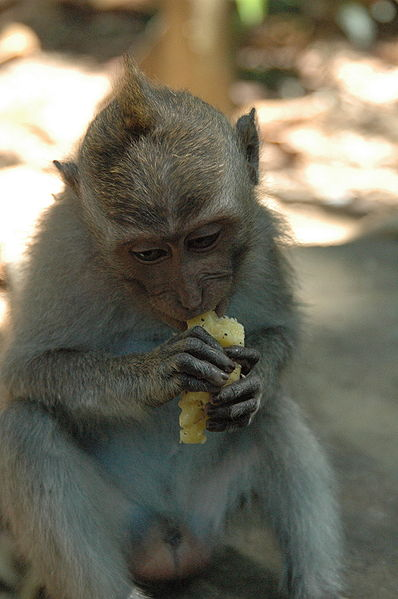 Bananas are rich in potassium which prevents bones from weakening.  Perfect for acrobatic primates!
