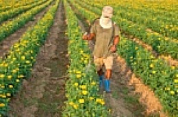 large scale spraying of insecticides
