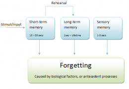 Hierarchical organization of cognitive memory.
