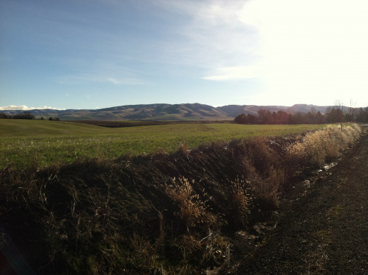 Headed Towards the Blue Mountains of Walla Walla