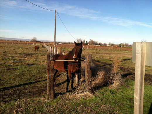 An Equine Friend We Greeted Along Powerline Road