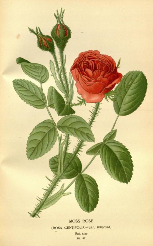 {1896-1897}