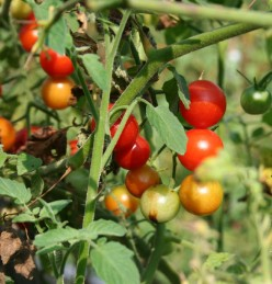 Tips on Growing Vegetables in Pots and Containers
