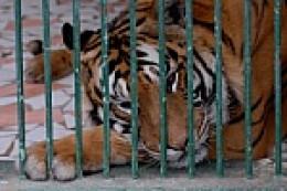 man's inhumanity to animals