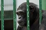 man caging animals