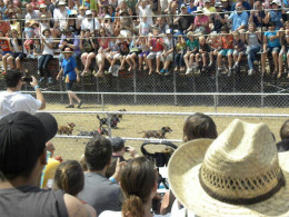 Wiener Dog Races in Buda Texas